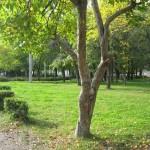 Парк за ДК Химиков, город Бийск