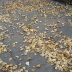 ломкие листья