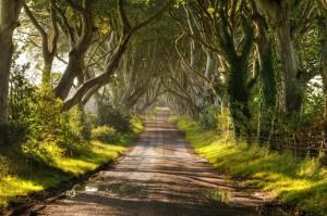 The Dark Hedges - Аллея буков в Ирландии