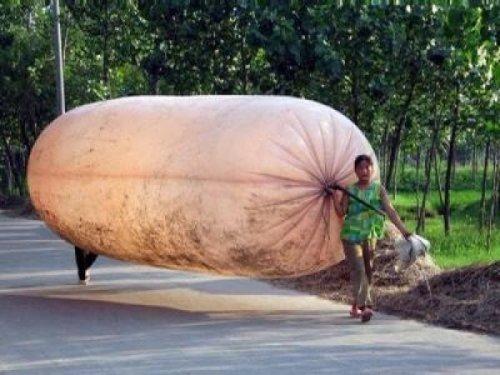 шестиметровый пластиковый мешок наполнен газом из ближайшего месторождения - Биньчжоу, провинция Шаньдун, Китай
