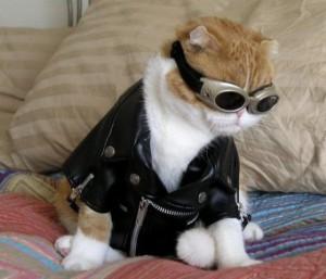 """""""Международный день кошек"""""""