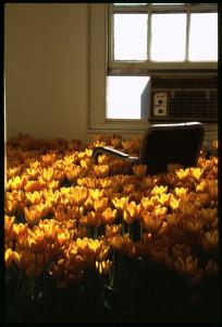 Интересная инсталляция Bloom от Анны Шулайт