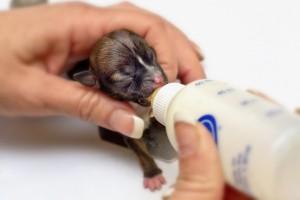 Самый маленький щенок в мире