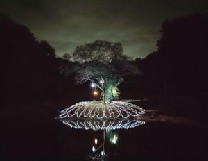 """Инсталляция: """"Звездная ночь в траве"""""""