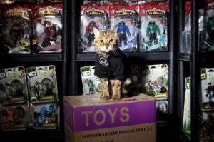Как кот получил работу охранника игрушек