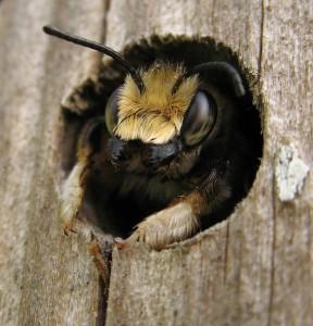 Отели для пчел