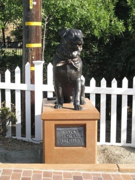 Пёс Боско — Сунол, Калифорния