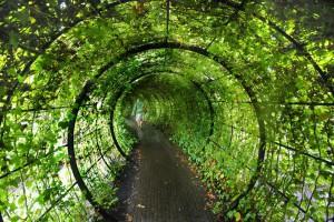 Сад ядовитых растений - Альнвика