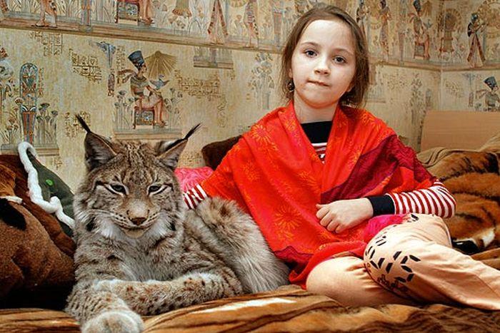 Bitterroot Bobcat amp Lynx Bobcats and Lynx as Pets!