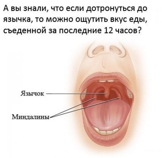 язык рот еда интересно
