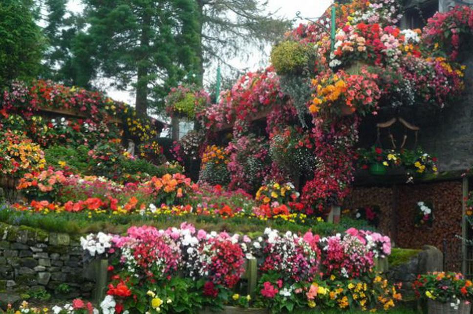 Как сделать сад цветущий