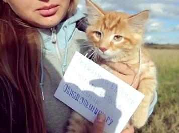 Обманутые дольщики подняли на аэростате котёнка