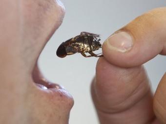 Смерть от поедания тараканов
