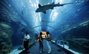 Гигантский крытый аквариум