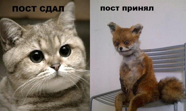 Упоротая лиса и кот пидрила