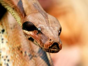 змеиные головы