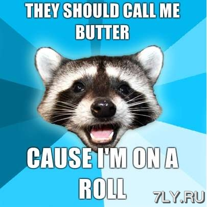 12 мемов о животных за 2012 год