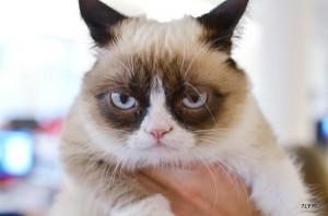 Сварливая кошка