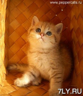 Котенька педрила