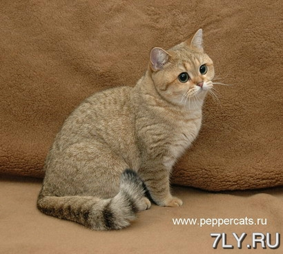 Котенька Starecat
