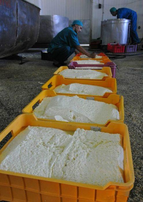 производство копченого сыра сулугуни