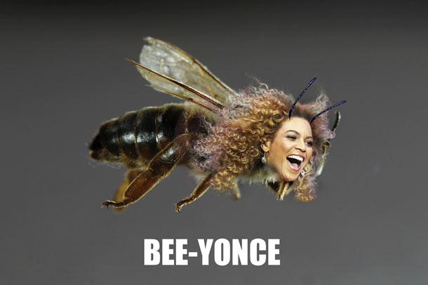beeyonce-2