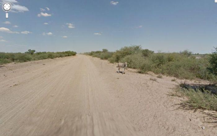google_donkey_03