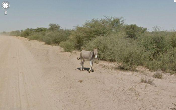 google_donkey_04