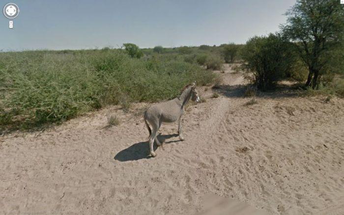 google_donkey_05