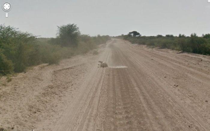 google_donkey_08