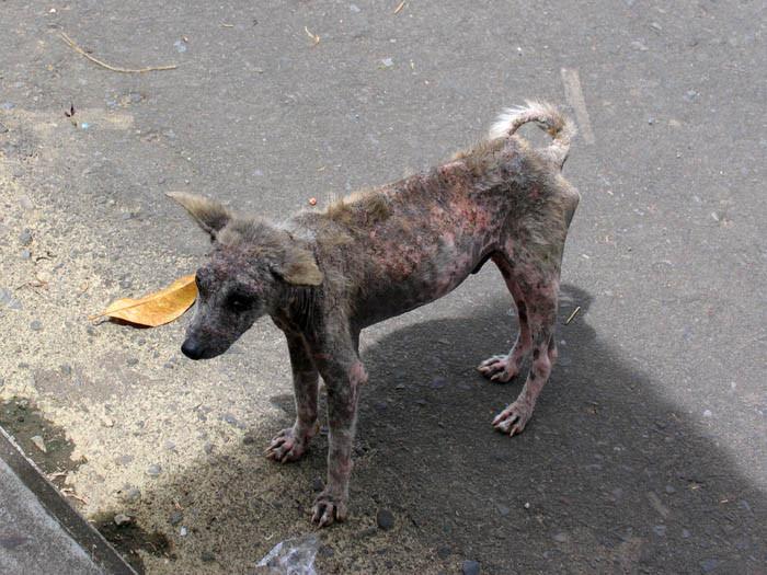 Японка морила голодом десятки собак