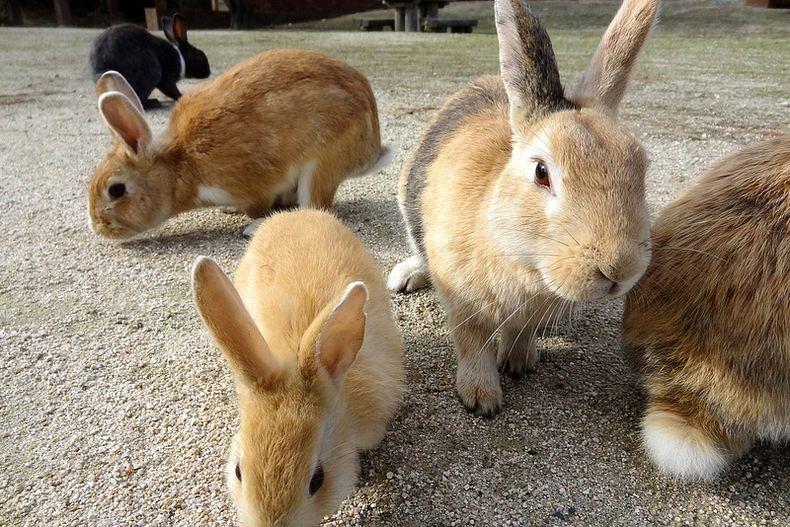 rabbitisland01