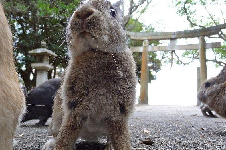 rabbitisland04