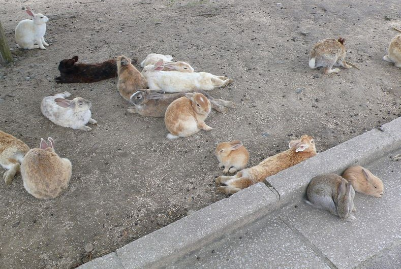 rabbitisland05
