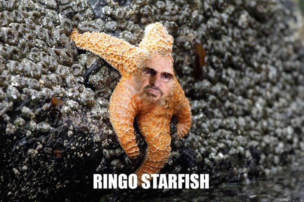 ringo-starfish-4