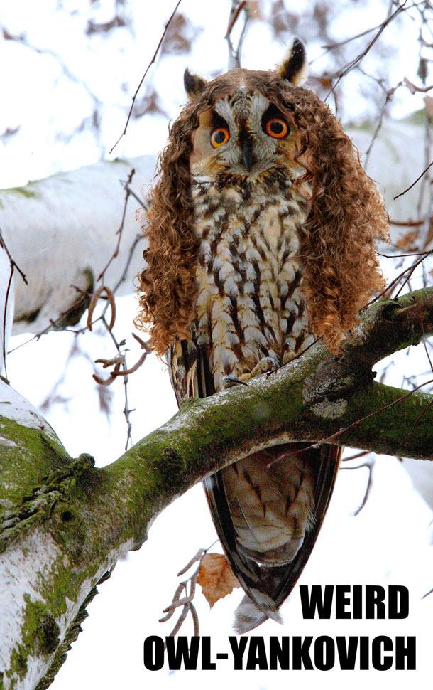 weird-owl-yankovich-1b