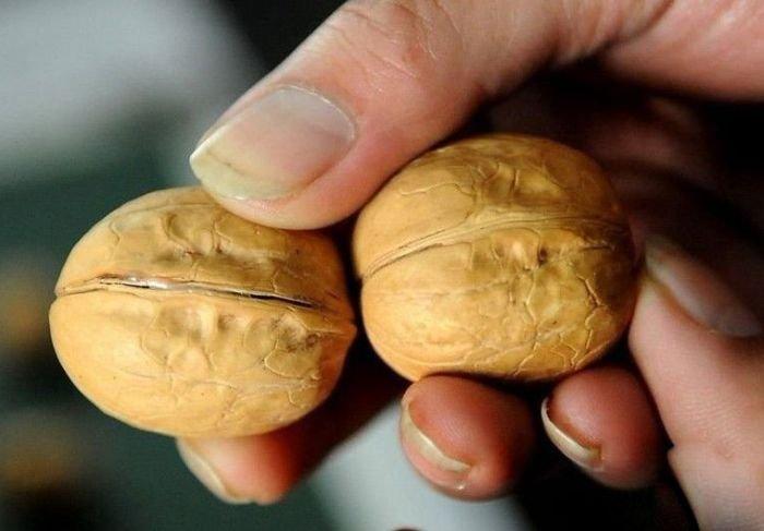 Китайская подделка грецких орехов