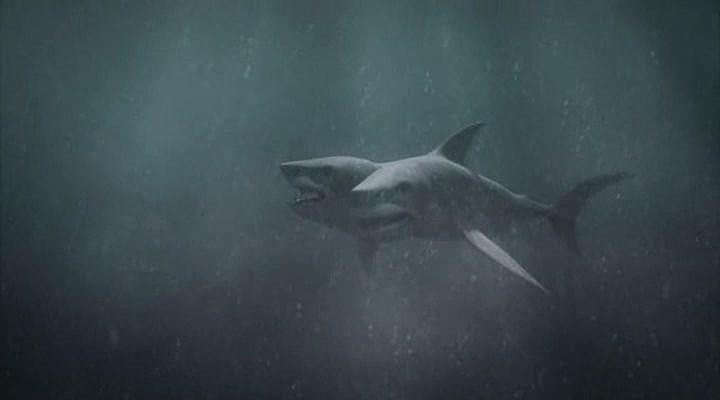 Американцы поймали удивительную акулу