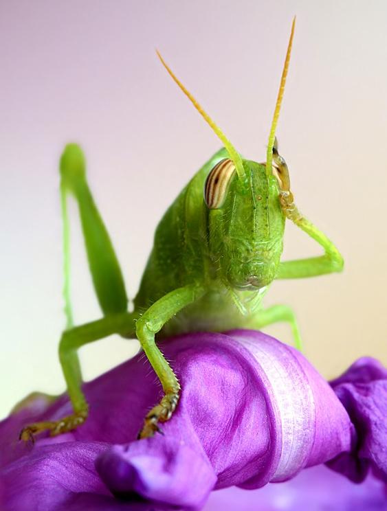 grasshopper_00
