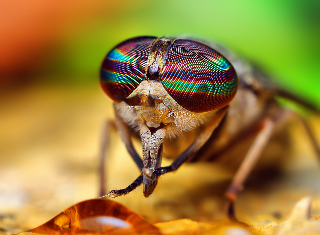 insect_002