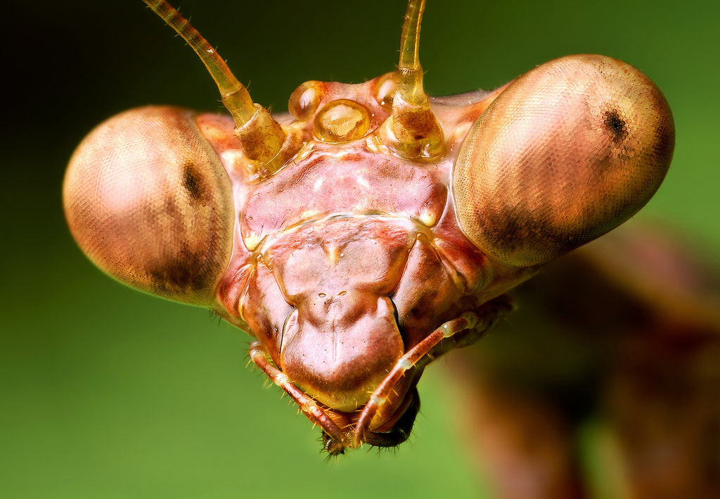 insect_005