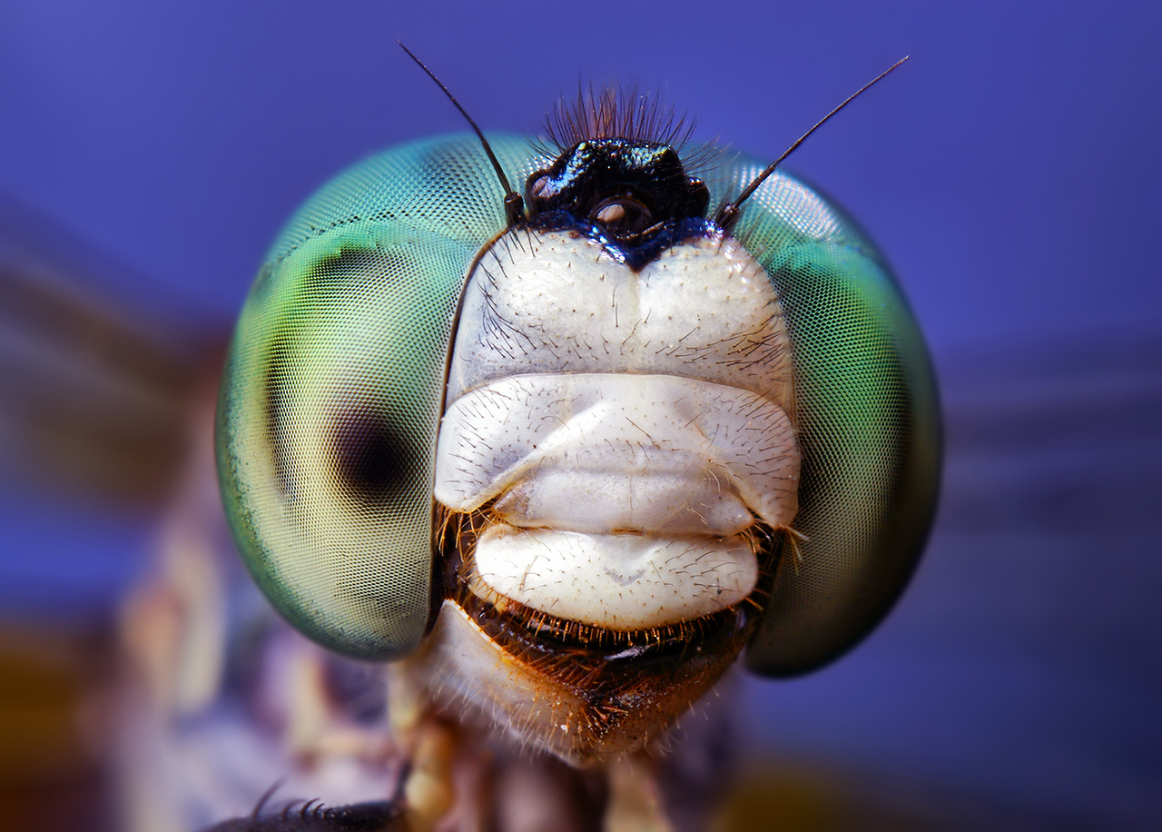 insect_006
