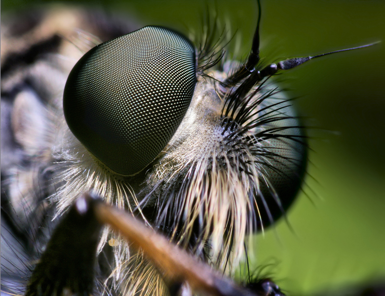 insect_008