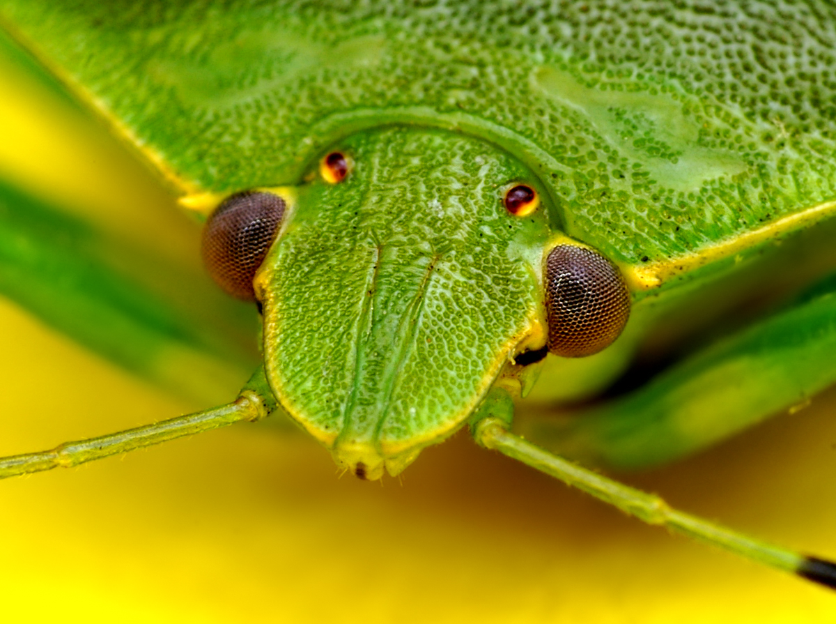 insect_009
