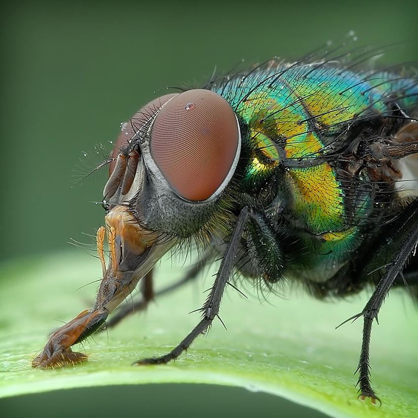 insect_010