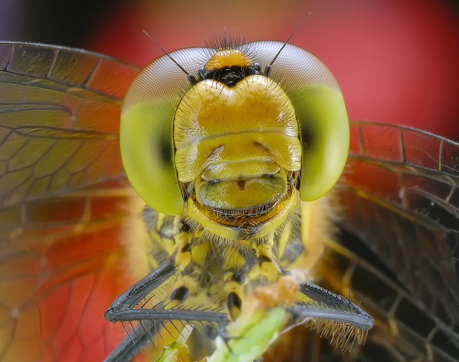 insect_011