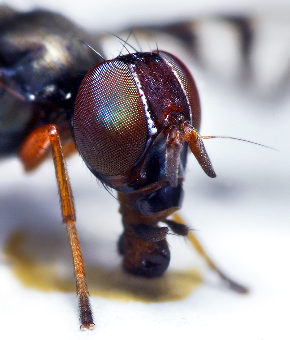 insect_013