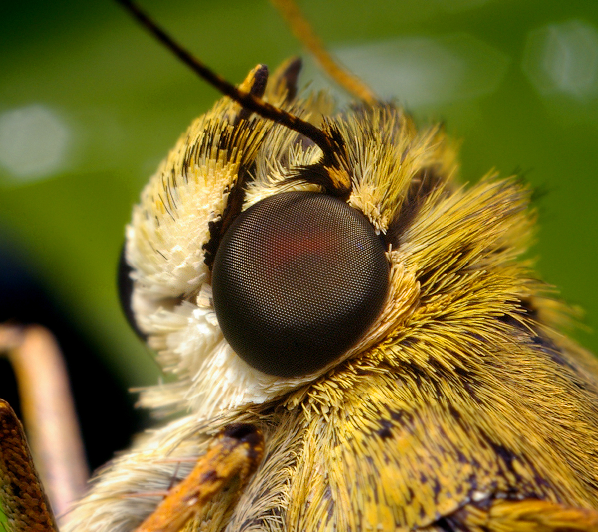 insect_014