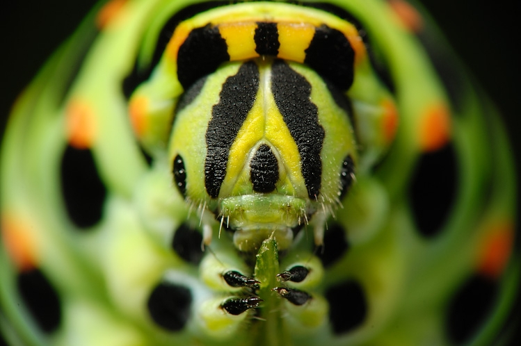 insect_017