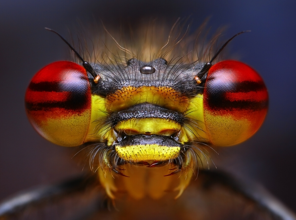 insect_macro_01